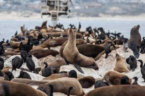 Sea Lions in Monterey Bay